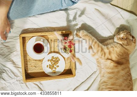 Woman Sitting On The Bed, And Drink Coffee, Cat Feeding