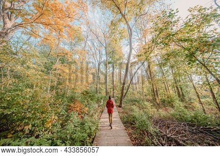 Walking in forest nature in autumn, Canada travel. Woman from behind relaxing in city park trail hike surrounded by maple trees yellow foliage.