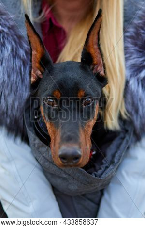 Unrecognizable Young Woman Hugging With Dog Doberman Outdoor