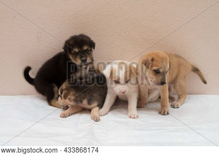 Portrait Of Group Little Puppies Dog Are Playing Together For Concept Of Friendship, Teamwork, Syner