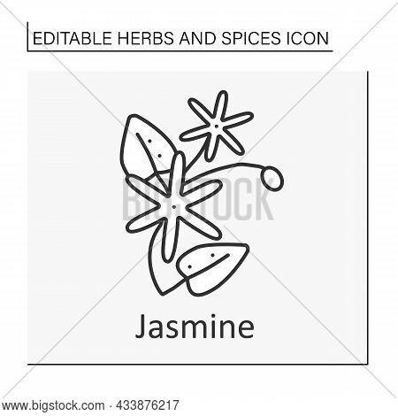 Jasmine Line Icon. Strong-smelling Flower For Tea And Additional Aromatherapy Procedures.medicine. H