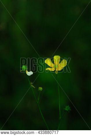 Stunning Gorgeous Closeup View Of A Yellow Tiny Flower On Dark Green Background, Summer Season