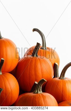 Heap of many orange pumpkins isolated on white background , Halloween design card