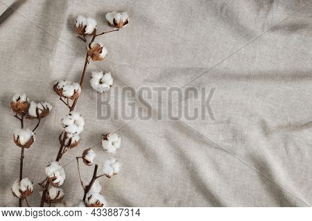 Cotton flower branch on a creased gray cloth textured background