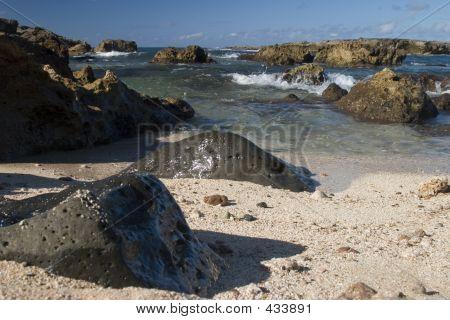Shark's Cove 2