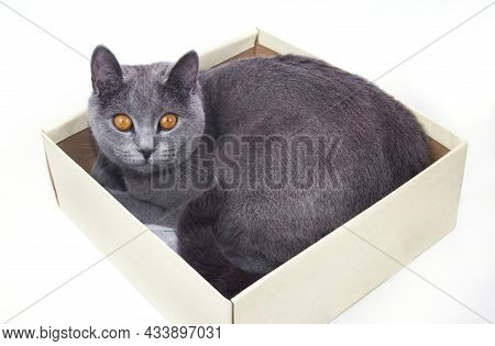 Cat Sitting In A Cardboard Box. Cat In A Box. Cat Sitting In A Cardboard Box.