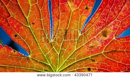Autumn Leaf Macro With Depth Of Field
