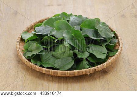 madeira vine, taiwanese leaf vegetable