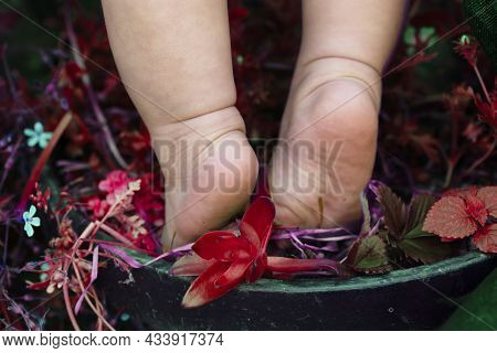 Close-up Of The Bare Foot Of The Baby Getting On The Flowerpot And Red Plant And Copy Space.