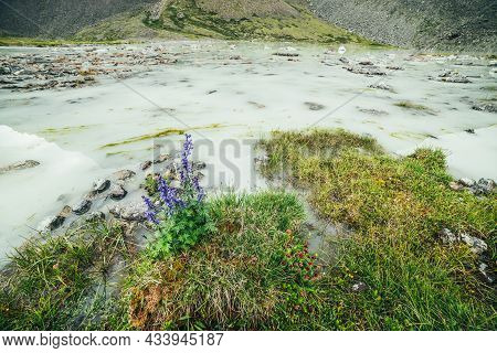 Vivid Alpine Landscape With Beautiful Purple Flowers Of Larkspur And Green Grasses On Shore Of Water
