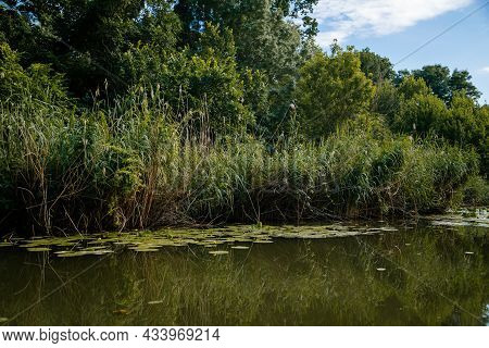 South Moravia, Czech Republic: Landscape By The Water. Stara Or Old Dyje River Near Januv Hrad At Le