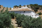 Country farm in olive grove Olvera Cadiz Province Andalusia Spain Western Europe. poster