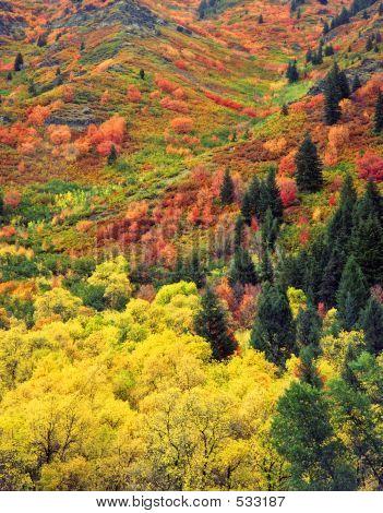 Autumn Tapestry (v)