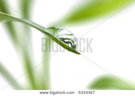 Rain-drops On The Fresh Leaf, Selective Focus