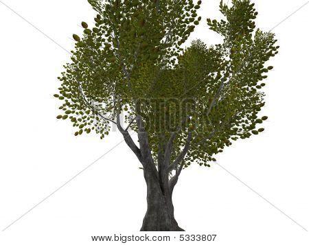 One Big Tree