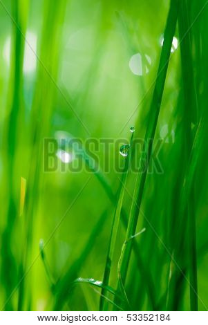 drop on grass and green background with natural bokeh, soft focus