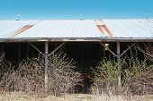 abandoned beef loafing barn poster