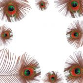 Abstract of the eyes of burnished golden red peacock feathers creating a framed border and set against a white background. poster