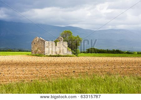 field with a tree and ruin of house, Plateau de Valensole, Provence, France