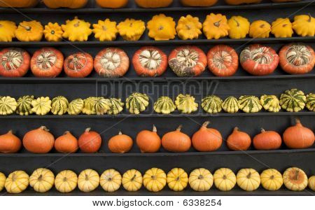 Five Rows Of Pumpkins