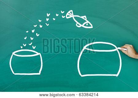 Fish Escaping Into Bigger Tank