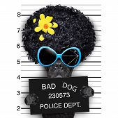 mugshot of hippie wanted dog with flower in hair poster
