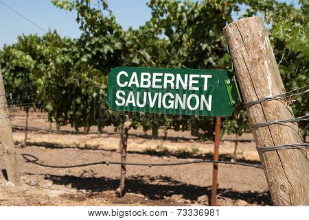 Sign For Cabernet Sauvignon Grapes