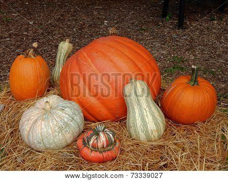 Pumpkin and Squash Medley