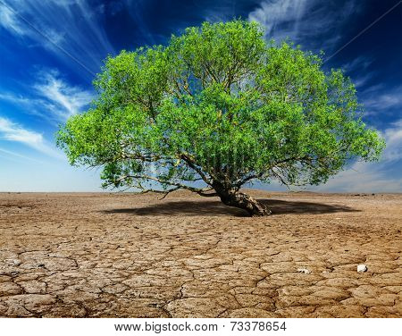 Life ecology solitude concept - lonely green tree on cracked earth