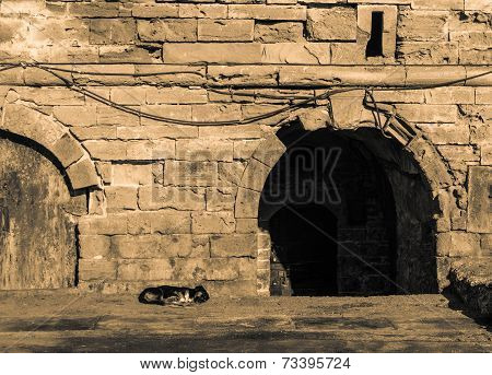 A dog sleeps on the floor in front of the entrance of the stone wall at Skala du Port in Essaouira Morocco poster