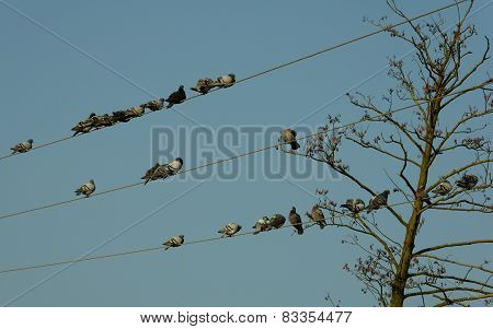 Numerous group of pigeons have meeting on trolleys be the tree