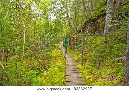 Hiking into a Green Wilderness on the Orphan Lake Trail in Lake Superior Provincial Park poster