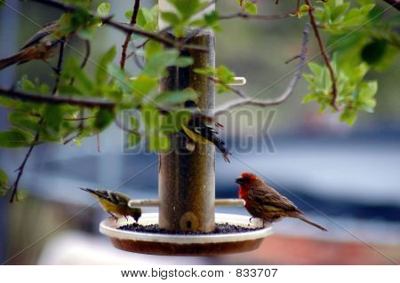 Birds At Feeder One