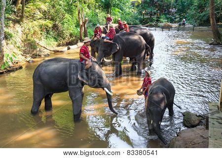 Mahouts Ride A Elephants And Prepare To Take A Bath Elephants