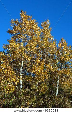 South Hills Aspen - Idaho