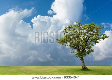 Lonely Tree On Ground In Cloudy Sky