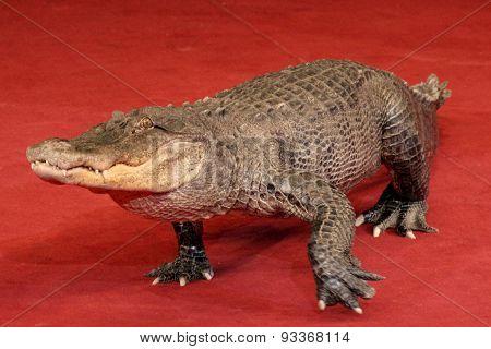 Reptile A Crocodile