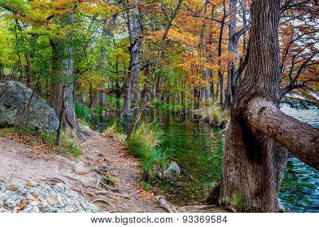 Fall Foliage on the Frio River, Texas