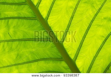 Leaf In Thailand
