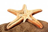 two starfish on sand with white background and high contrast effect poster