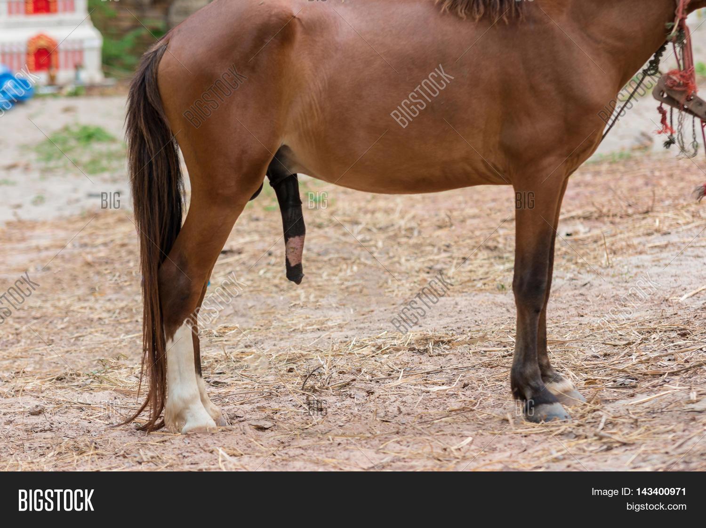 фото минет у коня № 880871 загрузить