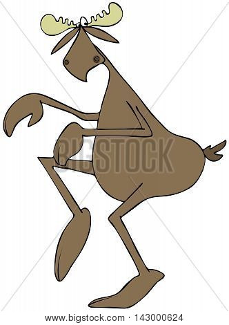 Illustration of a bull moose being sneaky and walking on his tip-toes. poster