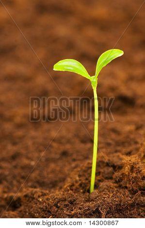Grüne Keimling zur Veranschaulichung Konzept des neuen Lebens