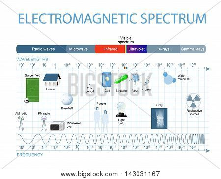 Electromagnetic Spectrum. The spectrum of waves includes infrared rays visible light ultraviolet rays and X-rays.
