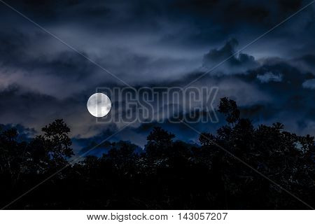Dark moonscape collage illustration scene with tropical vegetation and moon in blue cloudy background