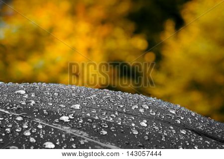 Black umbrella with large rain drops against yellow autumn foliage. Autumn or bad weather concept