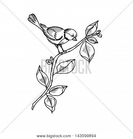 Cute bird on the branch of tree with leaves. Ornithology, wildlife, nature. Hand drawn graphic illustration isolated on white background. For prints, clothes designs, invitation cards, coloring pages.