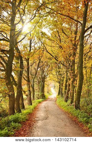 Autumn scene with sunbeam and colored trees at a country road or alley.