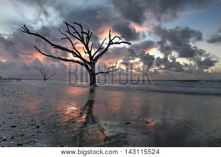 Oak tree submersed in water at sunrise with storm clouds in the boneyard beach of Edisto Island, South Carolina