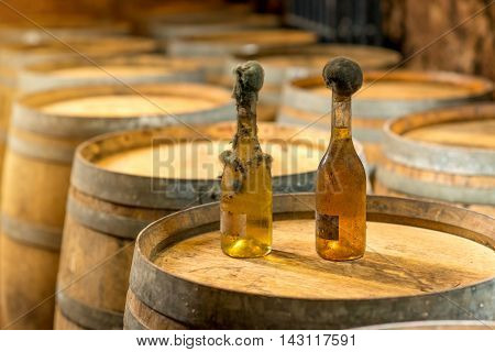 Old bottles of white wine with famous black mold in a wine cellar in Hungary